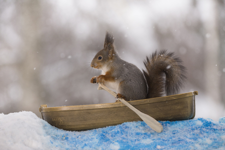 Red squirrel holding an oar in a rowing boat
