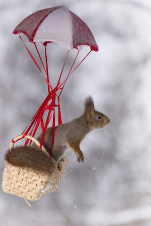 Red squirrel in a basket under a parachute  Stock Photo