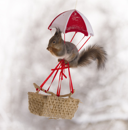 Red squirrel above an basket under a parachute