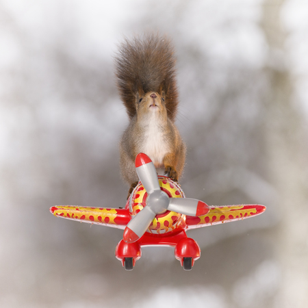 red squirrel is sitting on a plane