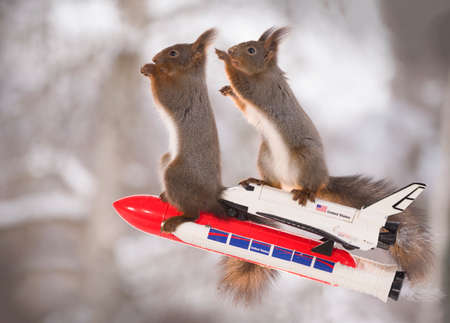 Red squirrels on an rocket with Space Shuttle
