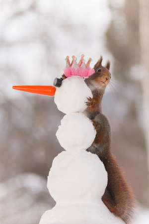 red squirrel is holding on to an snowman