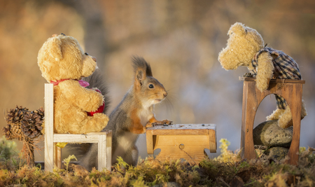Red squirrel att an table with bears Standard-Bild