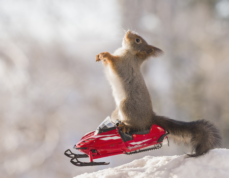 Red squirrel is looking up from a snowmobile
