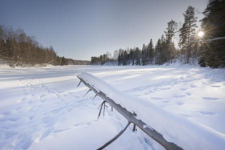 tree in an winter landscape with moose tracks  Standard-Bild