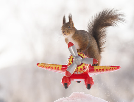 Red squirrel is standing on an airplane