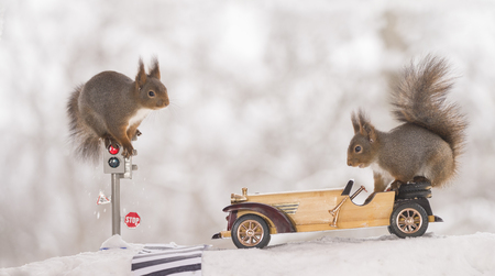 red squirrels on a traffic light and on a car in the snow