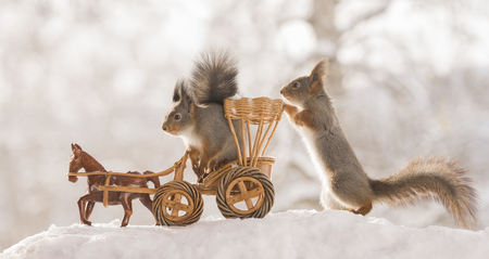 red squirrels inside an horse wagon in the snow   Standard-Bild