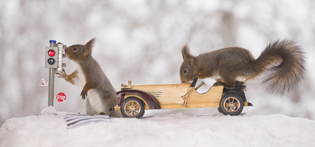 red squirrels is waiting for a traffic light and on a car in the snow  Standard-Bild