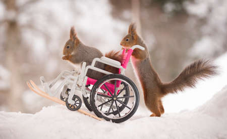 red squirrels are standing on skis and wheelchair