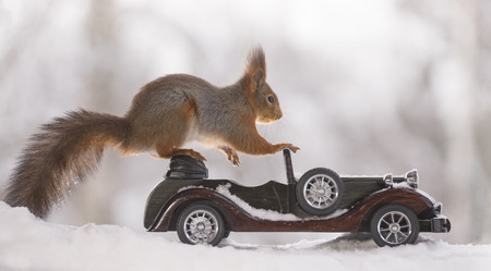 red squirrel on an car in the snow Standard-Bild