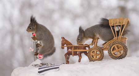 red squirrels are waiting for a traffic light with a wagon and horse   Standard-Bild