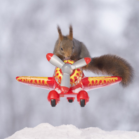 Red squirrel is standing with snow on an airplane Standard-Bild