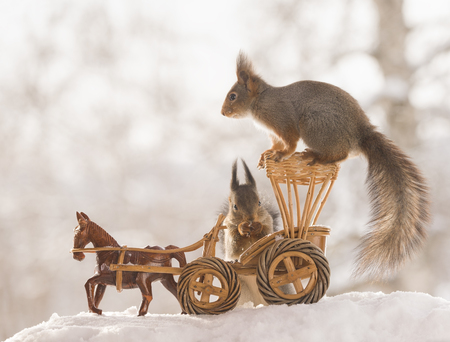 red squirrels with an horse wagon in the snow  Standard-Bild