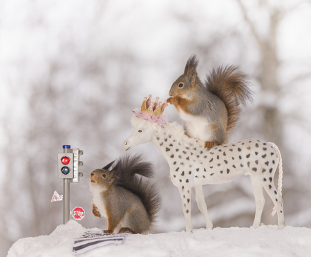 red squirrels with traffic light and horse in the snow