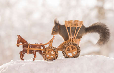 red squirrels in an horse wagon in the snow