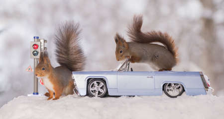 red squirrels with traffic light and car in the snow