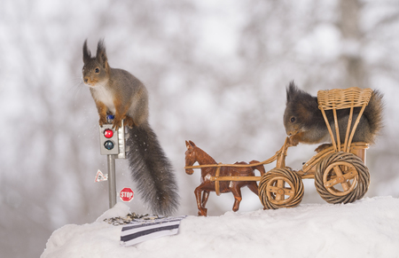 red squirrels are waiting for a traffic light with a wagon and horse