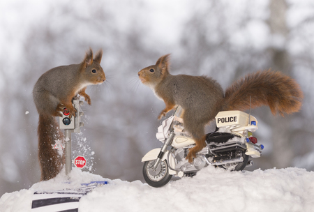 red squirrels on a traffic light and on a police motor