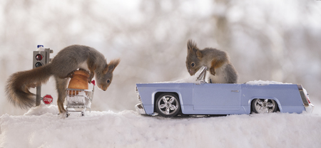 red squirrels with traffic light, shopping cart and an car