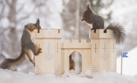 red squirrels with an castle in a winter