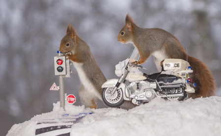 red squirrels on a traffic light and on a police motor cycle