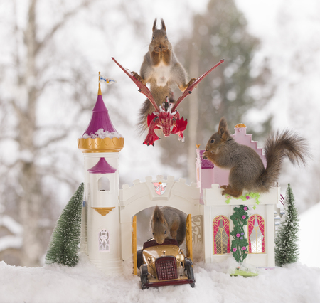 red squirrels  in winter  with a palace and dragon  Standard-Bild
