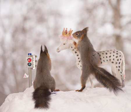 red squirrels with an traffic light and horse in the snow  Standard-Bild