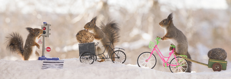 three red squirrels with an bike with eggs a crosswalk