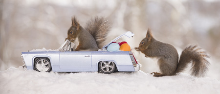 red squirrels  with an car and eggs in snow Stock Photo