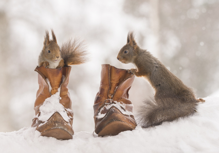 red squirrels are standing with and in shoes Stock Photo
