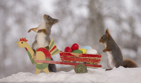 red squirrels in snow on a chicken and wagon with eggs  Stock Photo