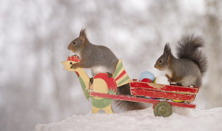 red squirrels in snow on an wagon with eggs