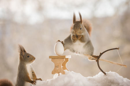 red squirrels on an bow with arrow with an egg Stock Photo
