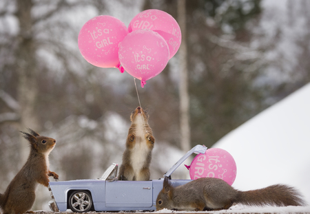 red squirrels with a car with balloon and text