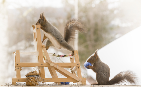 red squirrels on a weaving loom