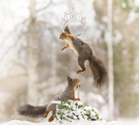 red squirrels on an cane with an crown