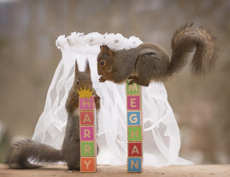 red squirrels and blocks under a bridal veil