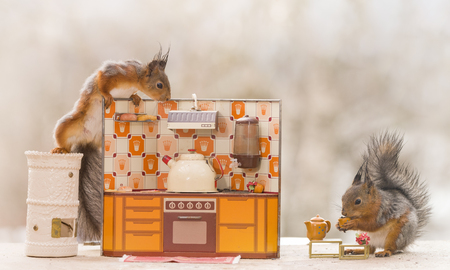 Red squirrels with an kitchen Reklamní fotografie
