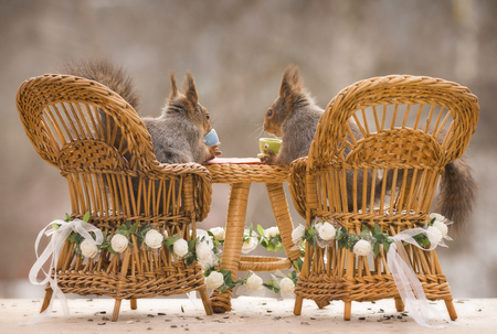 red squirrels sitting on chairs with an wedding table