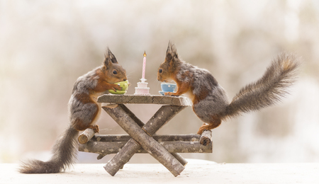 red squirrels on chairs with a table Reklamní fotografie