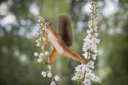 squirrel between Delphinium an perennial flower in split  Stock Photo