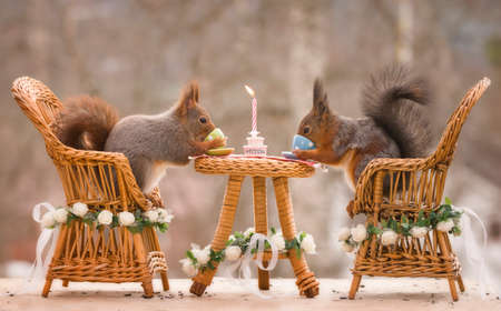 red squirrels on chairs with an wedding table