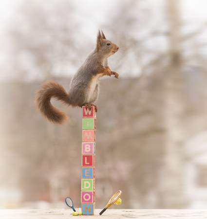 red squirrel on blocks with an Tennis racket  down