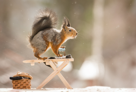 red squirrel with a Ironing Board  Reklamní fotografie