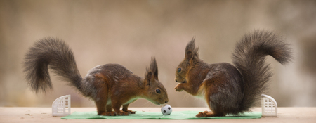 red squirrels together in a football stadium