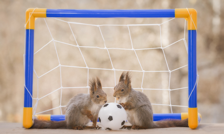 red squirrels with an football