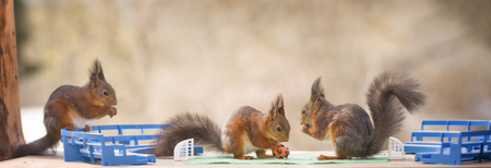 red squirrels stand in an football stadium