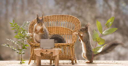 red squirrels are watching television on a couch Reklamní fotografie