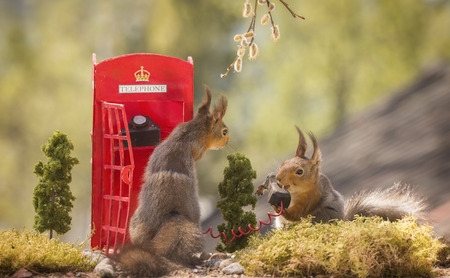 red squirrels with an telephone booth